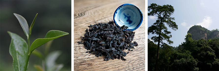 Da Hong Pao Tea Plant, Dried Leaf and rock terroir.