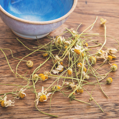English Chamomile Flowers