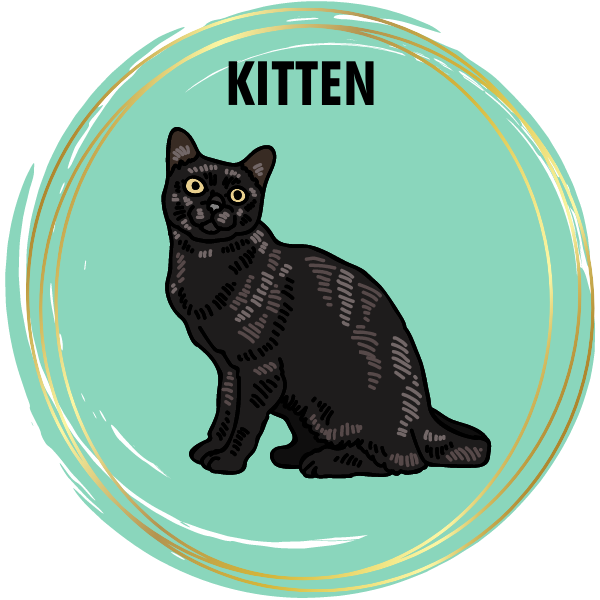 Kitten Diamond Painting Kits
