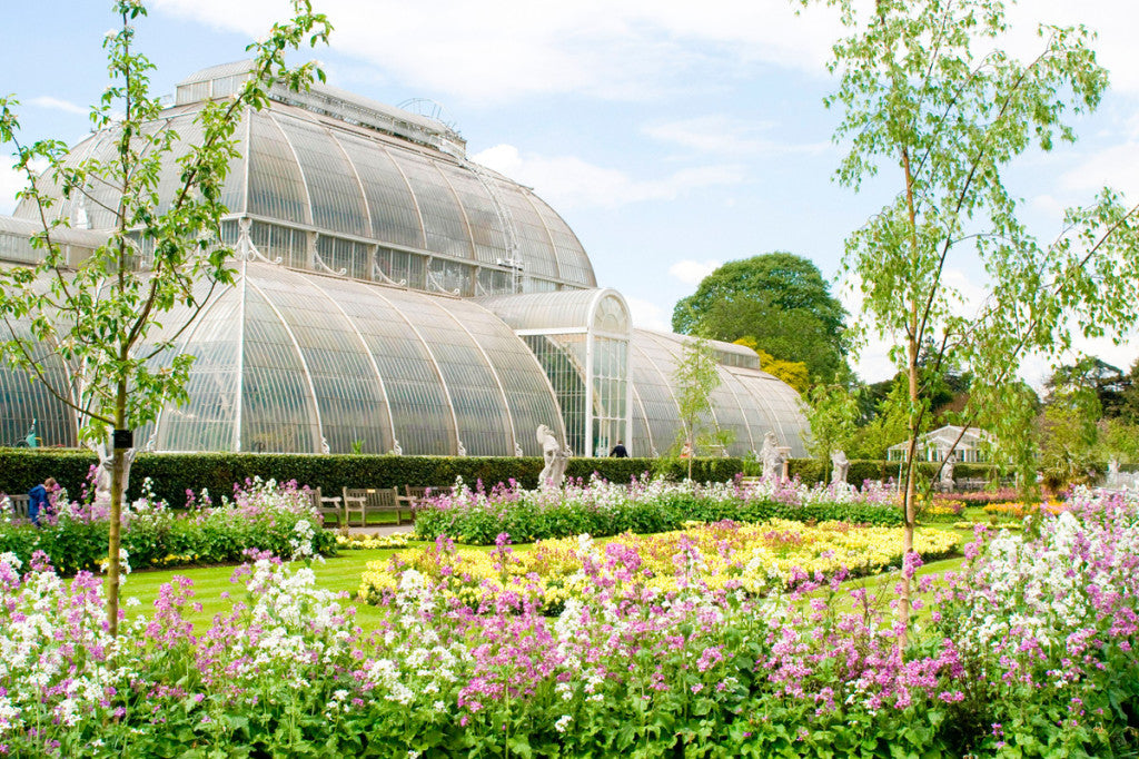 KEW-GARDENS-FLOWERS-IN-BLOOM-BLUE-BADGE-CO-TIPS-FOR-ACCESSIBILITY-IN-LONDON