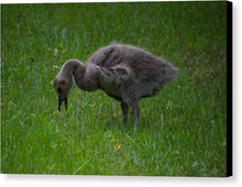 Load image into Gallery viewer, Baby Goose  - Canvas Print