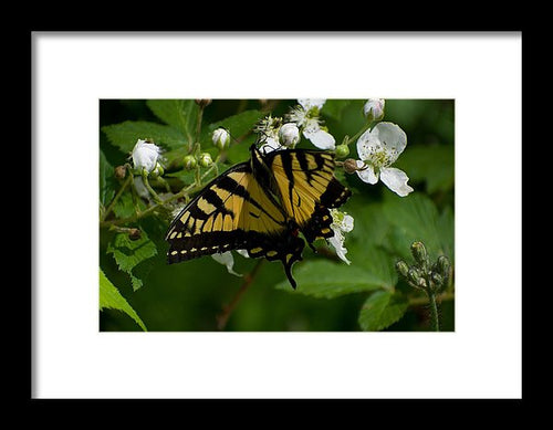 Butterfly #3 - Framed Print