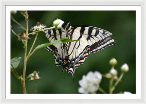 Butterfly #4 - Framed Print