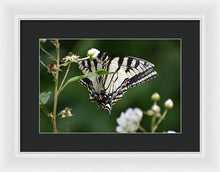 Load image into Gallery viewer, Butterfly #4 - Framed Print