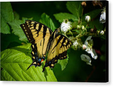 Load image into Gallery viewer, Butterfly - Canvas Print