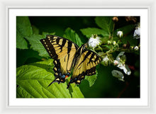Load image into Gallery viewer, Butterfly - Framed Print