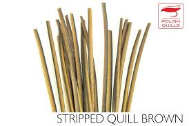 Hand Stripped Quill
