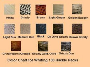 Whiting Farms 100 Pack