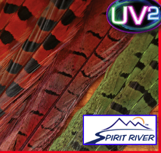 Spirit River UV2 Ringneck Pheasant Tail