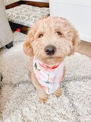Rosé All Day | Dog Bandana