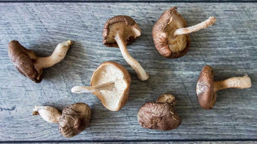 Shiitake Mushrooms - CSA Add-on