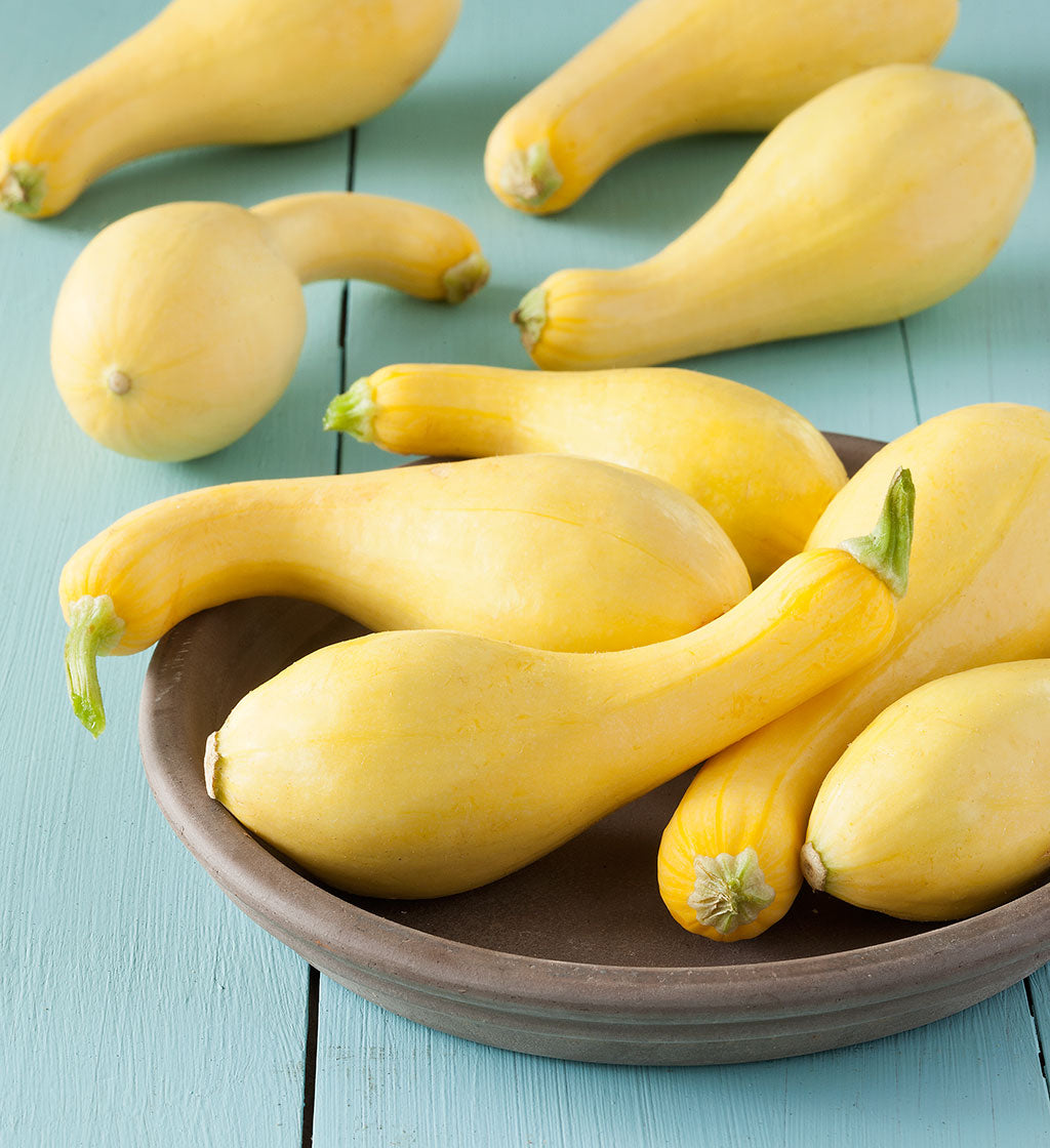 Summer Squash- CSA Add-on
