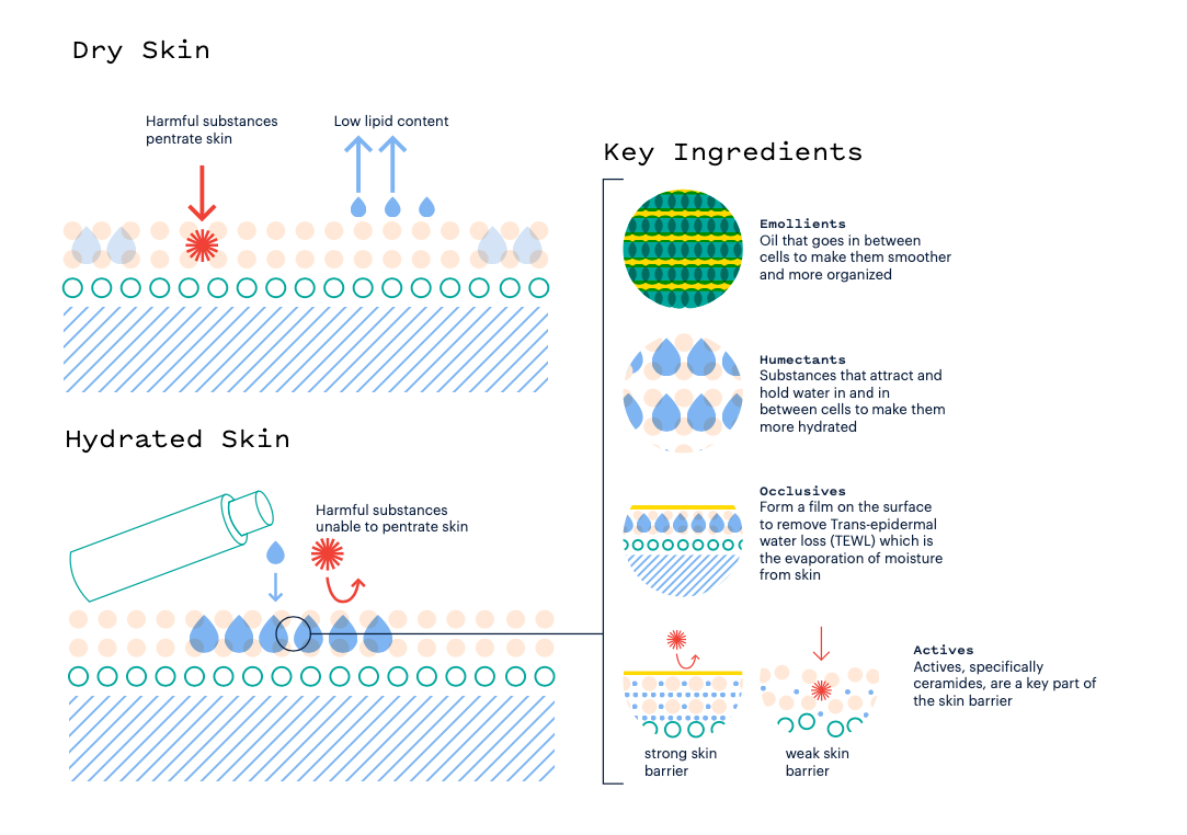Diagram showing how facial moisturizers work on the skin