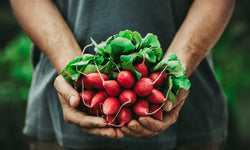 Top Myths and Misconceptions About Organic Produce