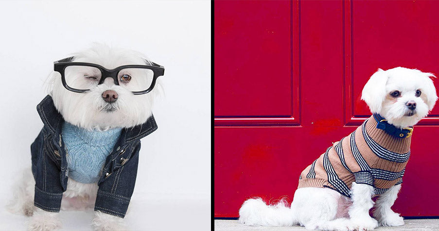 """Dog fashion & Designer Dog Clothes"" – TOP 10 BRANDS"