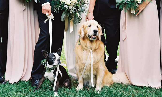 15 Best Dog Wedding Ideas to Include your Dog in your Wedding