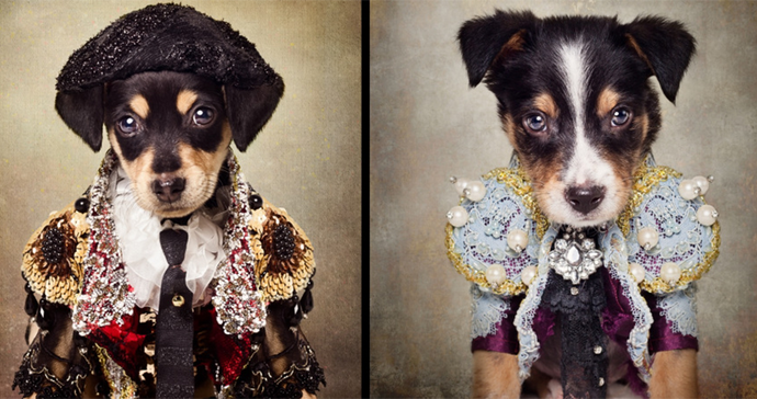 Canine Couture: The Most Luxurious Dresses Ever Made For Dogs