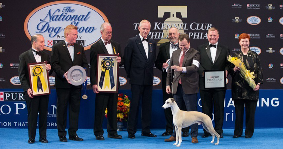 BEST WORLD NATIONAL AND INTERNATIONAL DOG SHOWS