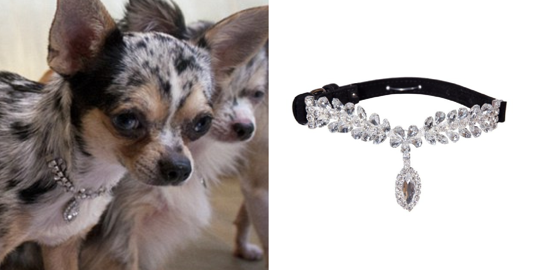 La Jeune Tulipe dog collar from the Posh Puppy Boutique