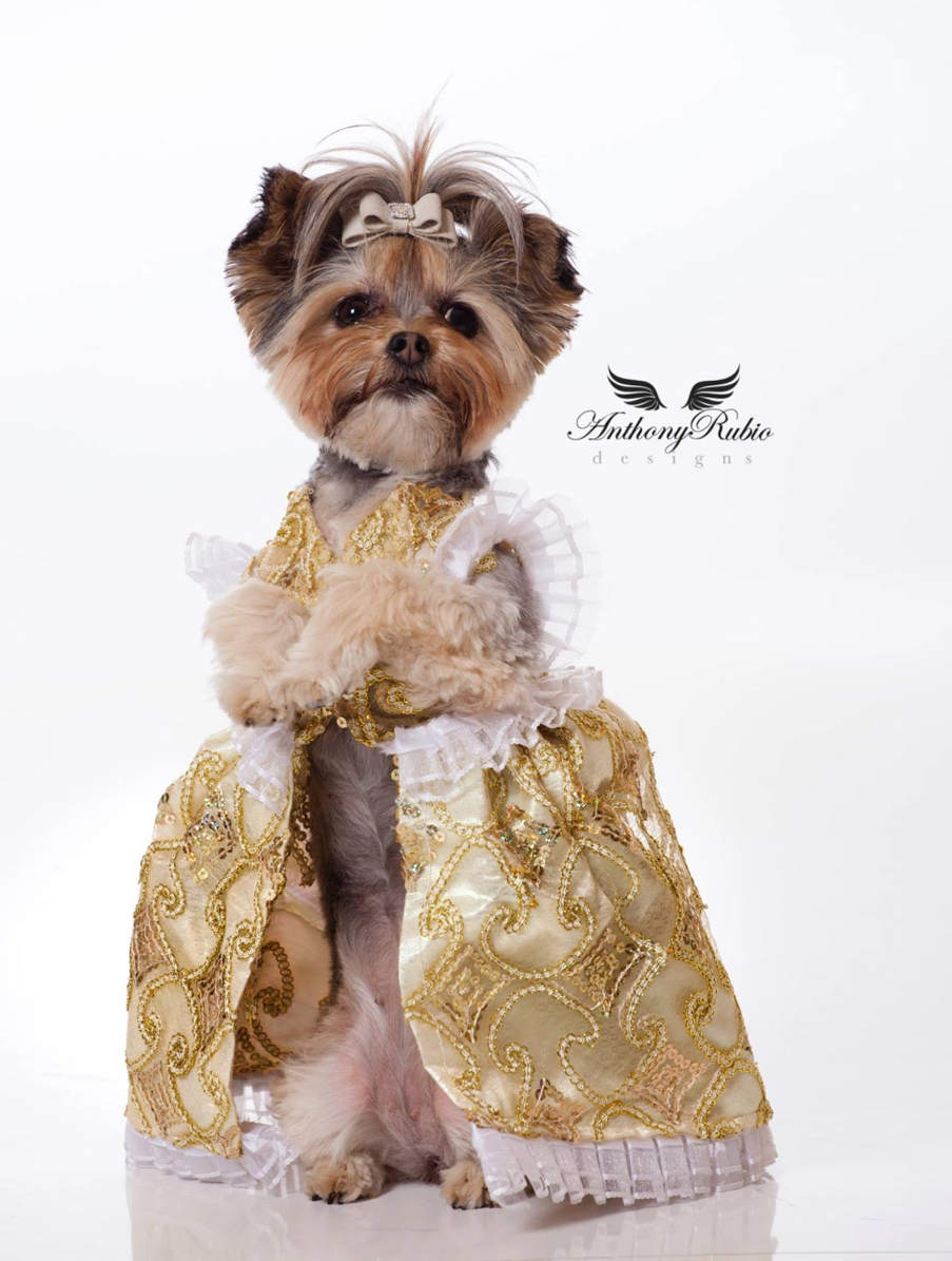 Antonio Rubio Dog Dress