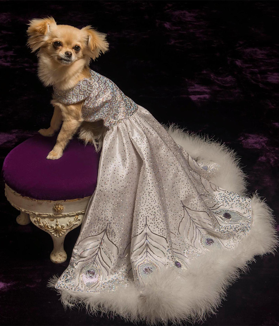 Most Expensive Dog Dress
