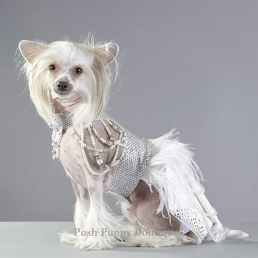Posh Puppy Boutique costume