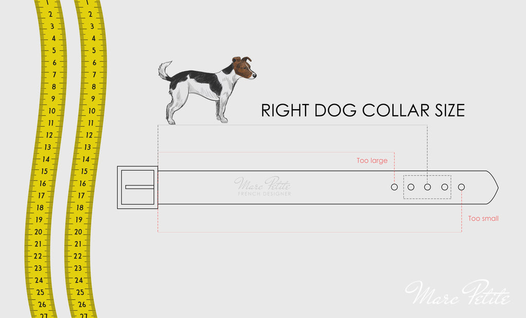 Right dog collar size