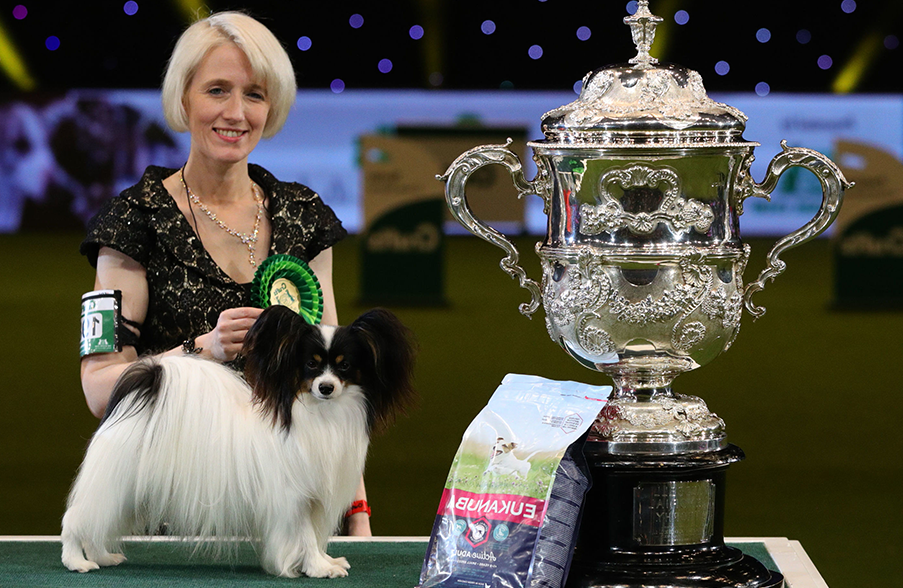 The Crufts Dog Show