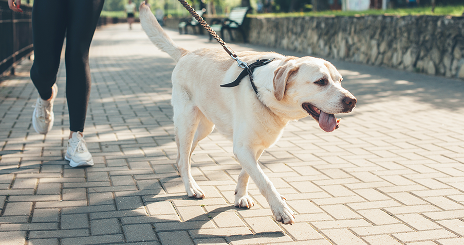 The Guide to Professional Pet Sitting