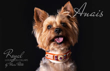 Charger l'image dans la galerie, Luxury Dog Collar for Yorkies