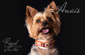 Luxury Dog Collar for Yorkies