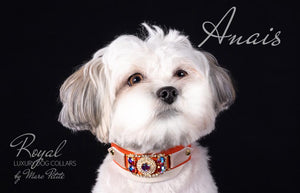 Luxury Dog Collar for maltese