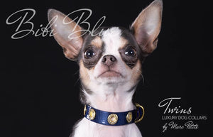 Chihuahua dog collar