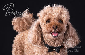 Toy Poodle collars