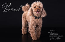 Load image into Gallery viewer, Poodle designer collars