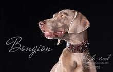 Load image into Gallery viewer, Weimaraner Dog Collar