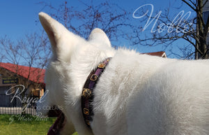 Husky Leather Dog Collar