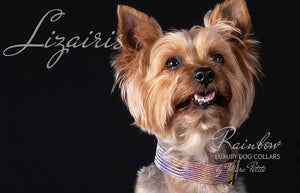 Collars for yorkie