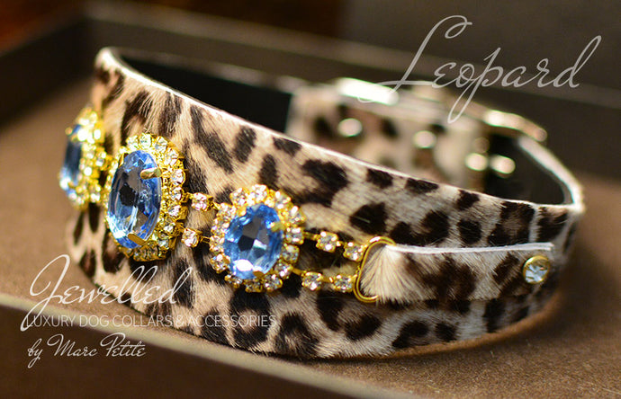 Luxury sparking dog collar