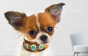 Chihuahua Dog Collars