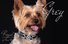 Load image into Gallery viewer, Yorky Dog Collar