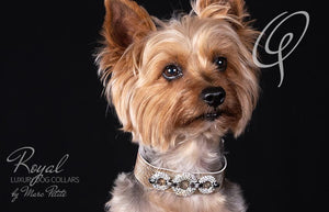 Yorkshire terrier collar