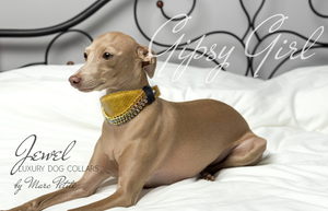 Martingale Gold Dog Collar for Whippet