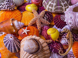 Jigsaw Puzzle-Sea Shell Treasures (550 Pieces)