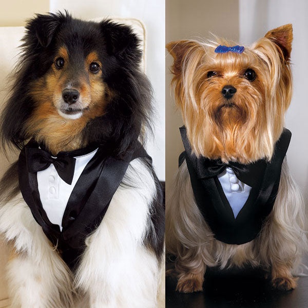 Pet Tux Small (Pack of 1)