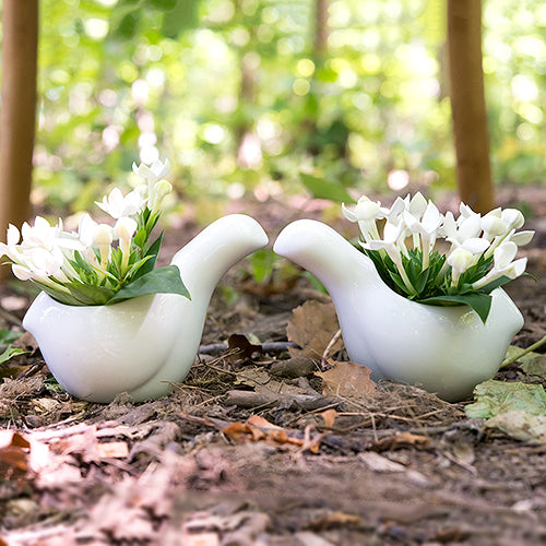 Small White Ceramic Bird Favor Container (Pack of 4)