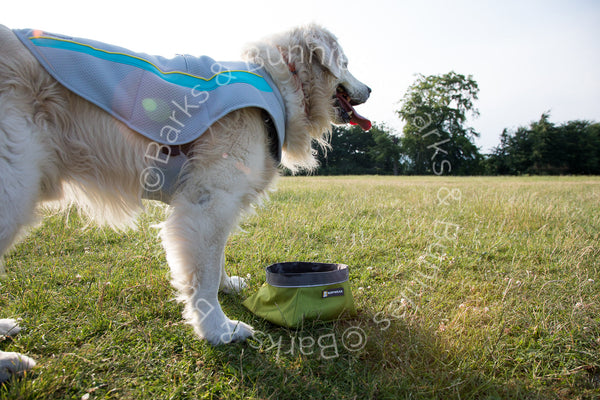 Ruffwear Swamp Cooler Dog Cooling Coat Review