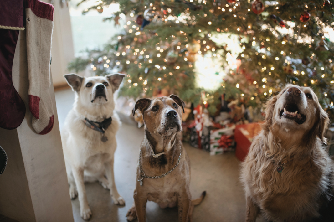 The Ultimate Dog Christmas Present Guide