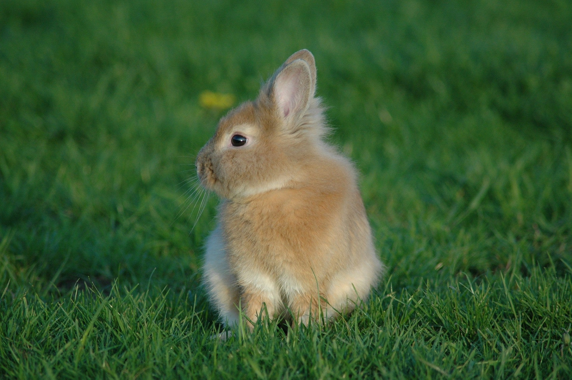 What Grass is Safe for Rabbits to eat?