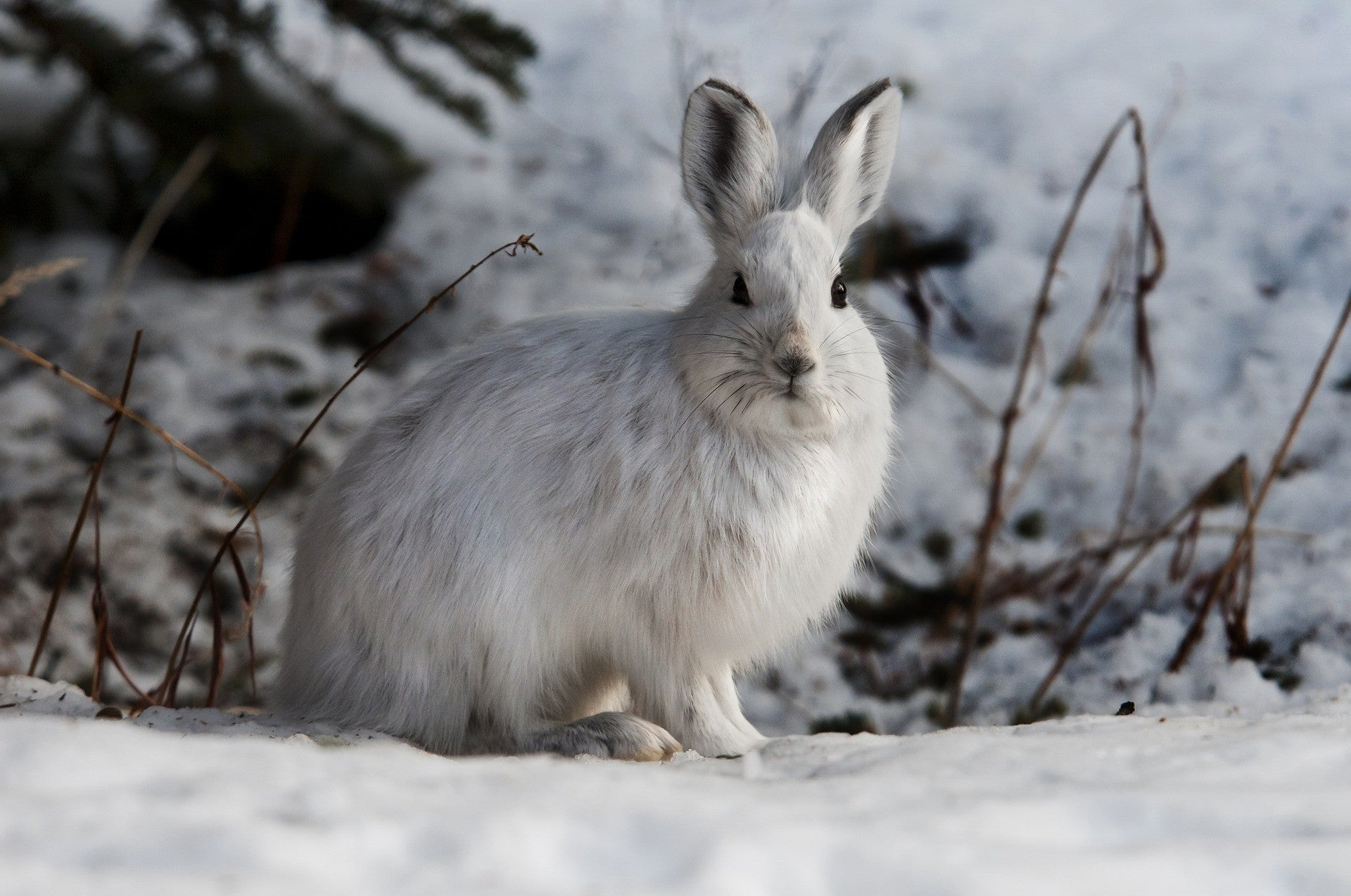 How to look after rabbits in winter